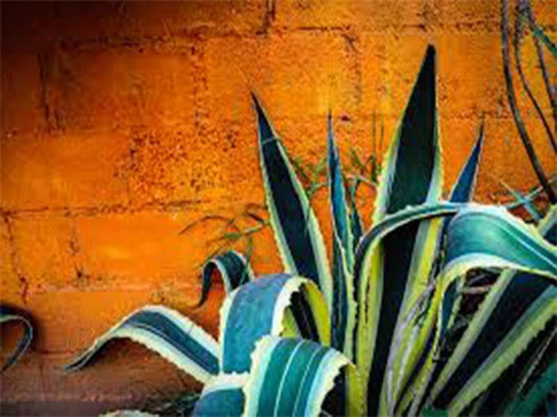 Bebidas espirituosas del México moderno