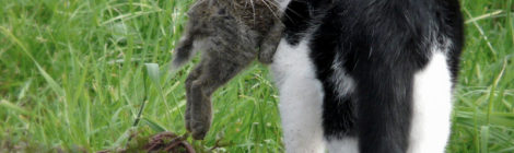 Los gatos de todos