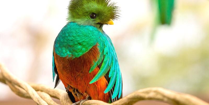 quetzal-300vxogy56gsehkxg1kz62