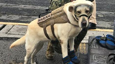 ¿Qué son los binomios caninos?
