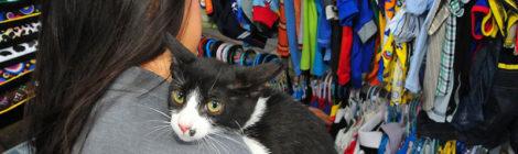 Cuatro festivales para amantes de los gatos, en la CDMX