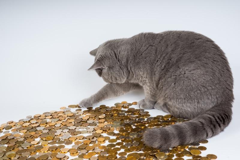 pet-kitten-cat-money-mammal-fauna-761175-pxhere-com