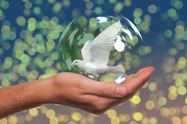 peace-dove-2489589_640