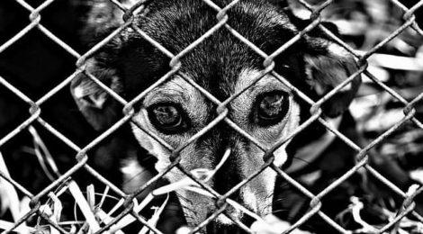 4 de octubre: Día Mundial de los Animales. ¿Cómo los tratamos en México?