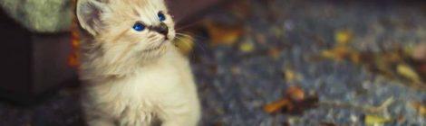 Día del Gato: ¿cómo los tratamos en México?