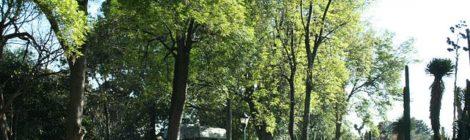 ¿Sabías que la CDMX tiene su propio jardín botánico?