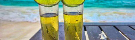 Datos curiosos en el Día Nacional del Tequila