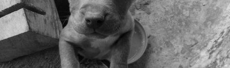 Policía de CDMX va contra maltratadores de animales