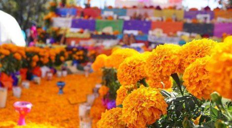 El cempasúchil: la flor de los difuntos mexicanos
