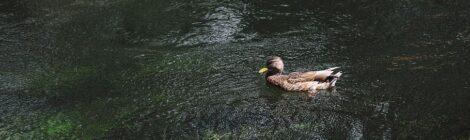 ¿Sabías que la CDMX está llena de ríos?
